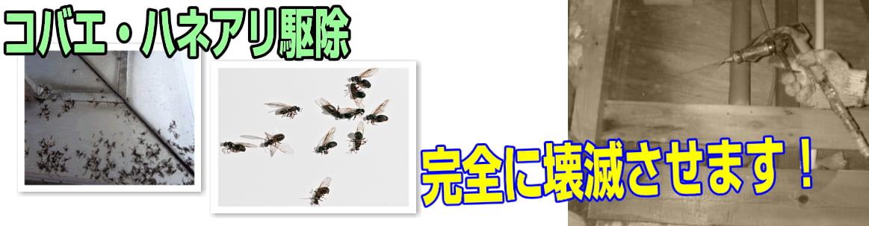 寿命 コバエ の お風呂場や洗面所で見かける小さなハエ。それってチョウバエかも?|その他|害虫なるほど知恵袋